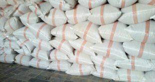 تولید جدیدترین پیاز خشک سفید در کرمان