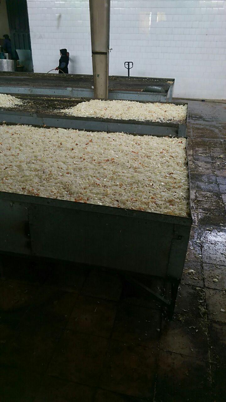 تولید پیاز خشک صنعتی