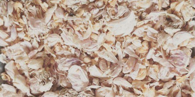 سیر خشک شده همدان